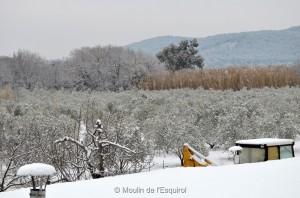 Esquirol-sous-la-Neige-005