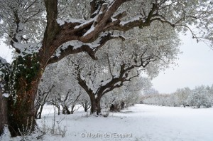 Esquirol-sous-la-Neige-017
