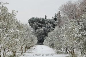 Esquirol-sous-la-Neige-030