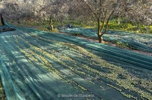 La Récolte - 2014