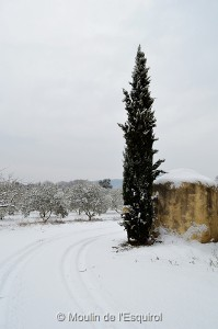 Esquirol-sous-la-Neige-001
