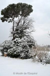 Esquirol-sous-la-Neige-002