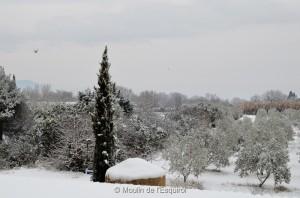 Esquirol-sous-la-Neige-003