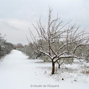 Esquirol-sous-la-Neige-008