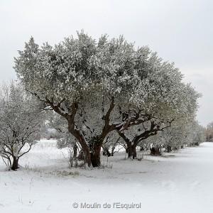Esquirol-sous-la-Neige-013