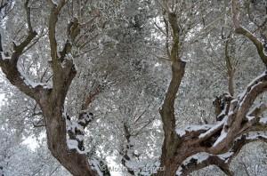 Esquirol-sous-la-Neige-016