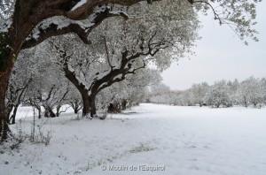 Esquirol-sous-la-Neige-018