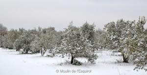 Esquirol-sous-la-Neige-022