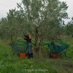 NAT 0637-crop